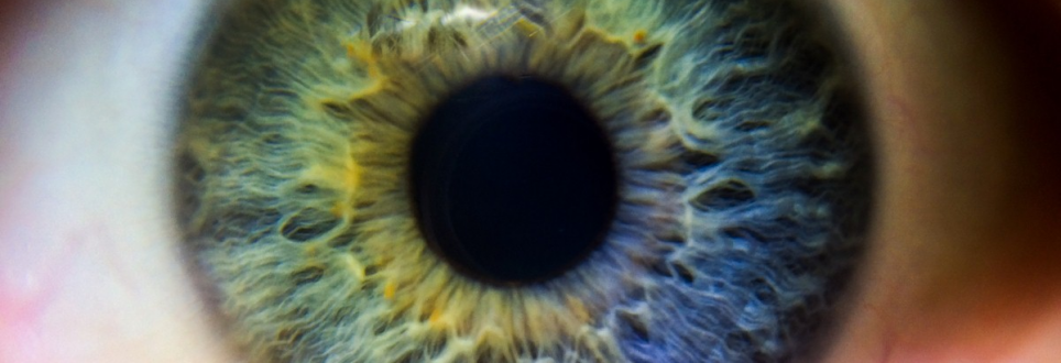 Eye damage could predict dementia risk, new study finds