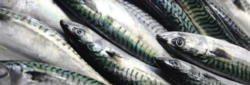 An oily fish-rich diet could protect you from ill health in old age