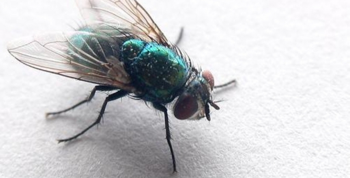 Zoomed Photo of a Fly