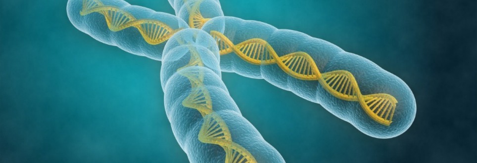 Researchers discover gene which increases risk of late-onset Alzheimer's