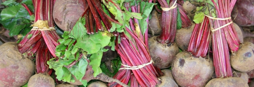 Study suggests beetroot could fight dementia