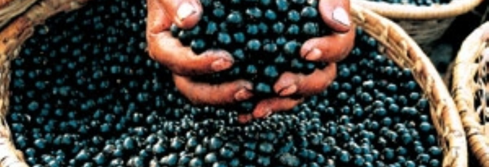 Eating berries 'lowers risk of Parkinson's'