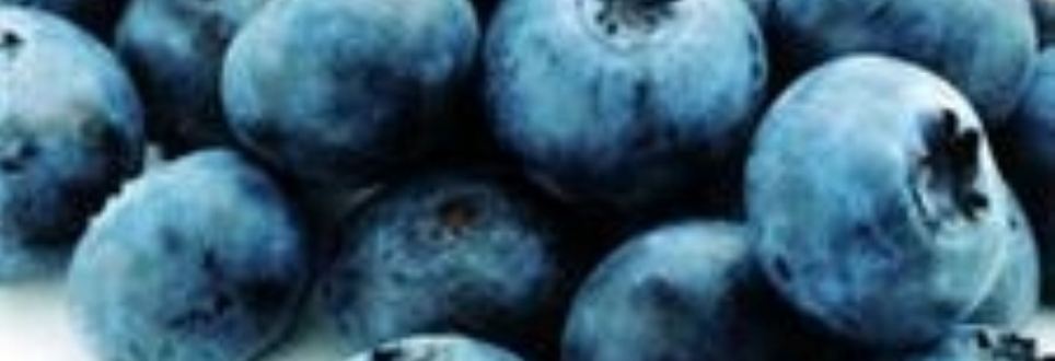Blueberries to ward off obesity?