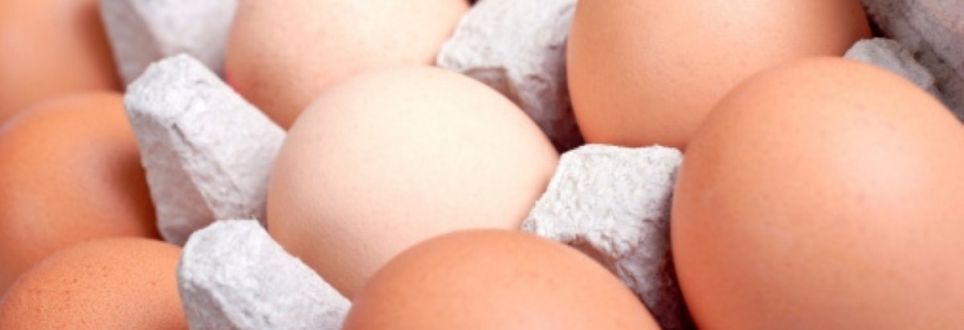 Protein 'important for dieting older women'