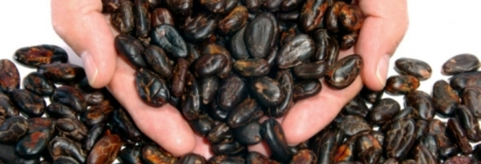 Cocoa may protect against intestinal pathologies