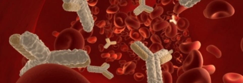 Immune cells found to protect against MS
