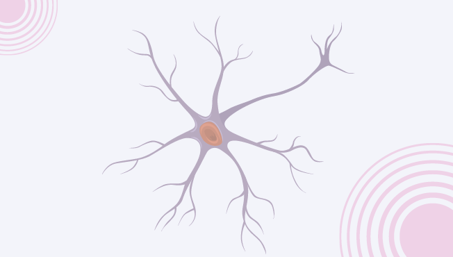 Introducing your vagus nerve!