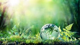 Globe on moss in forest environment
