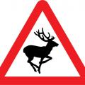 Wildlife road sign - deer