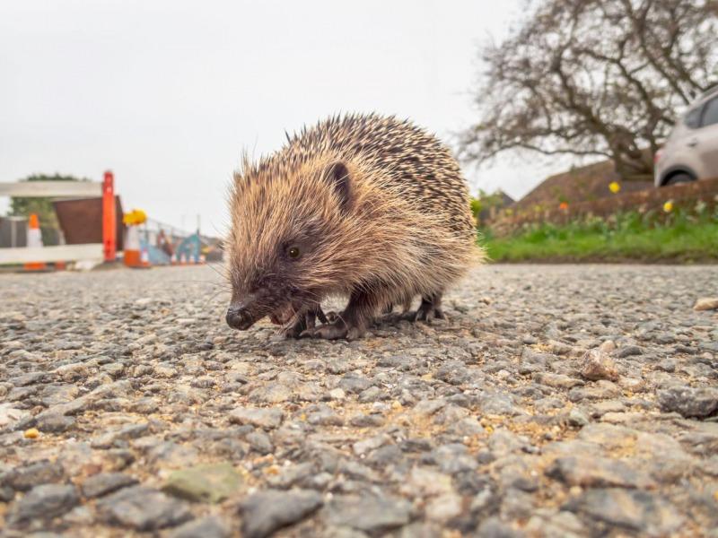 wildlife road safety