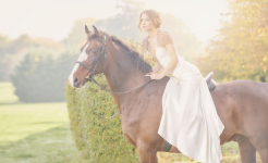 Stuart Wood Weddings / Four Seasons Weddings / Four Seasons Hampshire / Suzie Turner / Horse 2